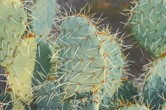 Fine Art Cactus. Close up view of a Beautiful Succulent Cactus Plant royalty free stock image