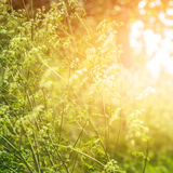 Fine art dreamy background. Fine art, dreamy forest, field of wild frowers, abstract floral background, bright sun light, autumn season, beautiful nature royalty free stock photography