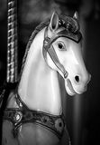 Fine art horse. Black and white riding horse Royalty Free Stock Photos