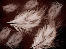 Fine art illustration - Feather. Beautiful feather image Stock Images