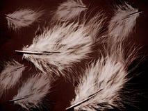 Fine art illustration - Feather. Beautiful feather image vector illustration