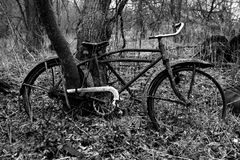 Fine Art Photography Old Bike. Fine art photography, image of an old, vintage retro bike. The bicycle is rusting away in the woods and has a tree growing through stock photo