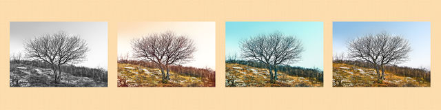 Fine art scene. A single tree in different ways Stock Photos