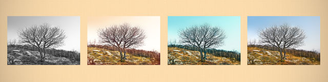 Fine art scene. A single tree in different ways Royalty Free Stock Images