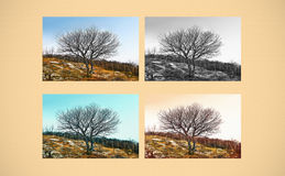 Fine art scene. A single tree in different ways Royalty Free Stock Photography
