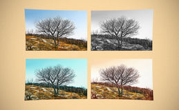 Fine art scene. A single tree in different ways Stock Image