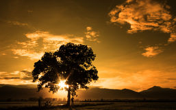 Fine art silhouette of single tree Stock Image