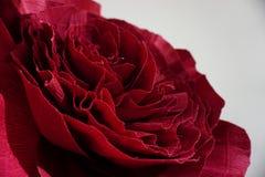 Fine artificiale del fiore di Borgogna su su fondo bianco Struttura del fiore di Borgogna Immagini Stock