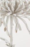 Fine astratta del fiore su Fotografie Stock