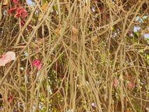 Fine astratta del fondo dei ramoscelli del cespuglio su Immagini Stock