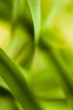 Fine astratta della pianta sul colpo Immagine Stock Libera da Diritti