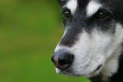 Fine attenta del cane in su Fotografia Stock