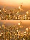 Fine autunnale del prato su Fotografie Stock