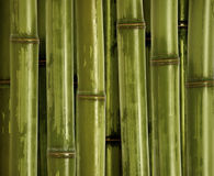 Fine bamboo background Stock Photos