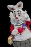 Fine bianca del coniglio su Fotografia Stock
