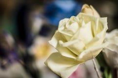 Fine bianca della Rosa in su Immagini Stock