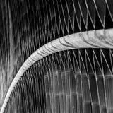 Fine in bianco e nero di macro sulla vista di una foglia verde meravigliosamente strutturata Fotografia Stock Libera da Diritti