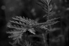 Fine in bianco e nero su di permesso fotografie stock