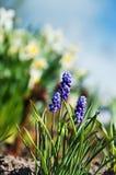 Fine blossoming spring garden Stock Photos