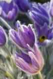 Fine blue flowers Stock Photos