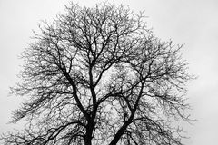 Fine branched, bare tree. Treetop of a fine branched, bare tree against gray sky Stock Images