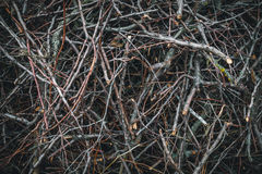 Fine brushwood. The jungle forest Stock Photos