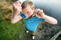 Fine catch of fish Royalty Free Stock Photo