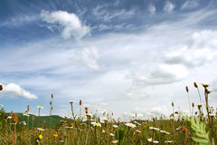Fine clear morning in mountains on a flower glade Royalty Free Stock Photo