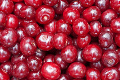 Fine closeup red Cherries background Royalty Free Stock Photo