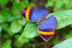 Fine Colourful della farfalla su fotografia stock