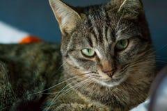 Fine costante di espressione del gatto su fotografia stock