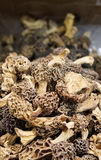 Fine cuisine, Morchella esculenta Stock Photo