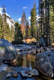 A fine day. Shallow brook in a valley' surrounded by giant spruces royalty free stock photography