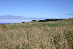 Fine day on the links. Golfer plays an approach shot at The Glen, North Berwick Stock Image