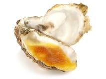 Fine de克莱尔Oyster -澳大利亚焦干酪 免版税图库摄影