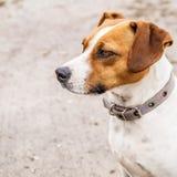 Fine del cane della museruola in su Fotografia Stock Libera da Diritti