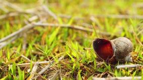 Fine del carrello sulla carcassa della lumaca sui campi di erba stock footage
