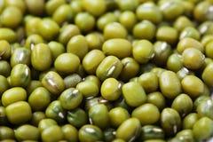 Fine del fagiolo verde In su Immagini Stock