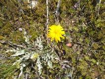 Fine del fiore dell'erbaccia di Thisisle sulla b fotografia stock