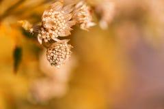 Fine del fiore della pianta selvatica su sull'arancia Fotografia Stock Libera da Diritti