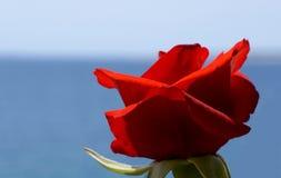 Fine del fiore della rosa rossa sulla vista sul colore blu di contrasto del mare e del cielo Fotografia Stock