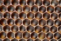 Fine del fondo del favo su Fotografie Stock