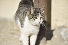 Fine del fronte del gatto in su Fotografia Stock