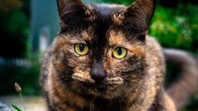 Fine del gatto su con fondo confuso fotografie stock libere da diritti