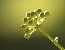 Fine del germoglio di fiore in su Fotografie Stock Libere da Diritti