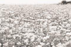 Fine del giacimento di fiore su Immagine Stock