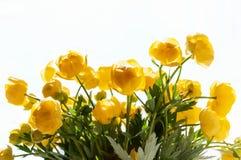 Fine del Globo-fiore dei fiori su Fotografia Stock