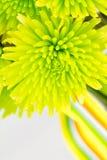 Fine del mazzo del crisantemo su Fotografia Stock