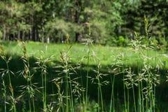 Fine del modello dell'erba su Fotografia Stock