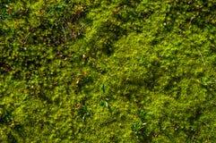 Fine del muschio della foresta su fotografie stock libere da diritti